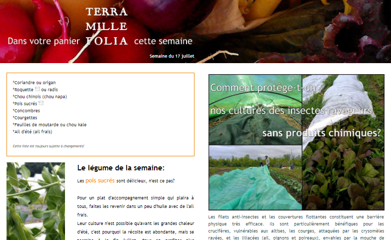 Terra Millefolia vegetable basket newsletter