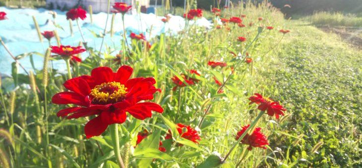 Planifier son jardin potager