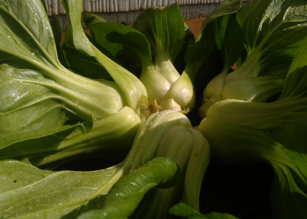 Légume biologique à découvrir: concombre citron