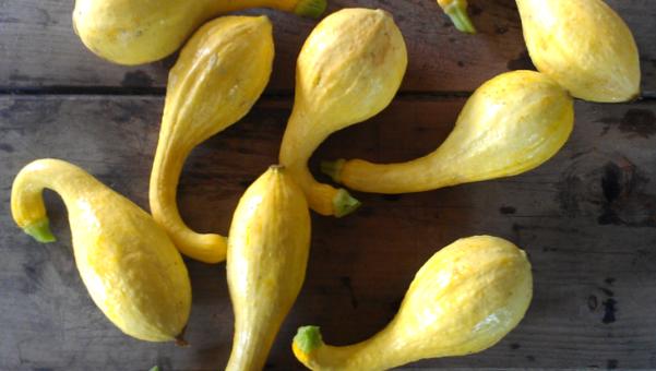 10 légumes bios à (re)découvrir