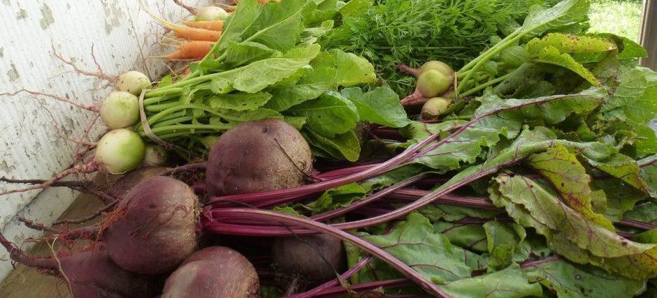 essentiel de cuisine: brosse à légumes